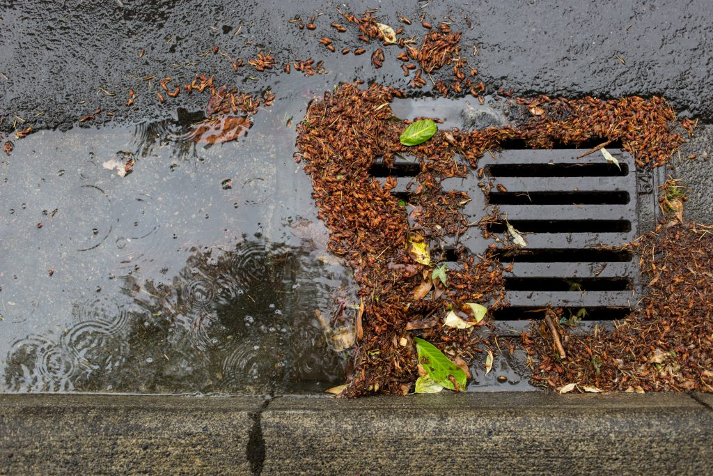 Common Storm Drain Issues